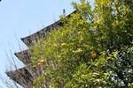 霊山-八坂の塔