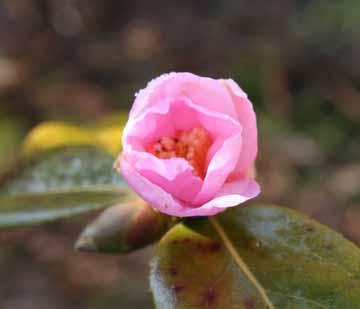 庭の蕾2010