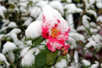 節句の雪01