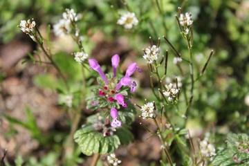 庭の花-雑草