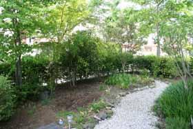 20095月の庭