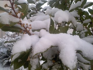 0306-雪01
