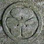足立-カタバミ