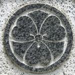 足立-剣カタバミ