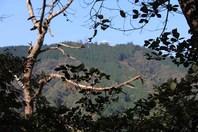 白鳥_比叡山を見る