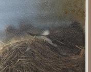 鳥の巣_0609