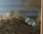 鳥の巣_0610