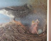 鳥の巣_0612