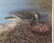 鳥の巣_0613