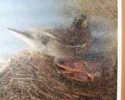 鳥の巣_0614