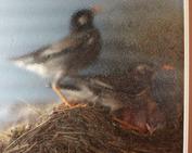 鳥の巣_0614-2