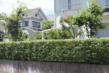 生垣刈り201107