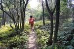 嵐山-羊歯の道