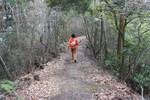 嵐山-雑木の道