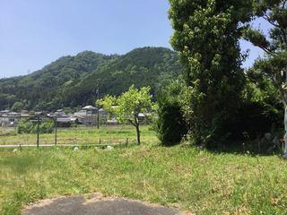 0520_hatuda03.jpg