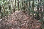 滝峰-横堀土塁